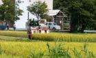 【収穫の秋】稲刈り♪
