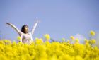 【イベント情報】菜の花まつり 5月3日-5日